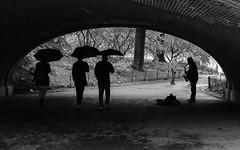 Sax under arch (ep_jhu) Tags: nyc x100f newyork ny musician fujifilm light shadows umbrella silhouette centralpark music dark newyorkcity fuji bw tunnel acros raining saxophone performer unitedstates us