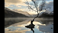 A cold and lonely tree (PentlandPirate of the North) Tags: llanberis lonetree llynpadarn snowdonia northwales lake reflection mist winter baubles