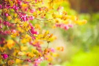 Belated Blossom