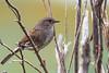 D50_3172.jpg (ManuelSilveira) Tags: ferreirinha aves fauna santamariadafeira aveiro portugal pt