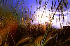 Silvestres (portalealba) Tags: zaragoza zaragozaparque portalealba canon eos1300d flores nwn