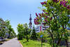 _NCL7008-Edit (chitoroid) Tags: nikond750 afsnikkor2470mmf28ged japan hokkaido sapporo flower