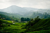 Lovely Cameron Highland (WhiteFlowersFade) Tags: malaisie malaysia asia asie asiedusudest southeastasia travel voyage reise nikon d7000 dk7 cameronhighlands paysage landscape landschaft tea teaplantation boh thé plantationdethé montagne mountains green vert campagne countryside