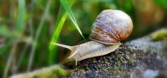 Un escargot dans mon jardin (mamietherese1) Tags: world100f earthmarvels50earthfaves
