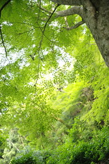 仏徳山 興聖寺 (Sharpness-1) Tags: green leaves みどり