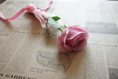pink rose (nearbyescape) Tags: pink rose flower arrangements tabletop styling light lifestyle gift surprise bokeh happy