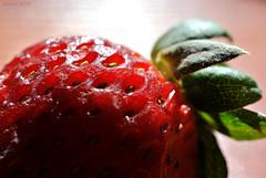 Macro (Javiera C) Tags: macro macrophotography frutilla fresa strawberry rojo red semilla seed hola leaf contraluz backlighting