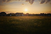 Sunset over buttercups (michaelbeecham) Tags: sunset flowers buttercups wildflowers nature naturephotography landscape landscapephotography evening warm spring fujix100f fujifilm documentingspace closetohome