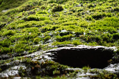 Australia_2018-238.jpg (emmachachere) Tags: subtropical trees hike waterfall boatride springbrook australia rainforest kanagroo animals koala brisbane boat lonepinekoalasanctuary