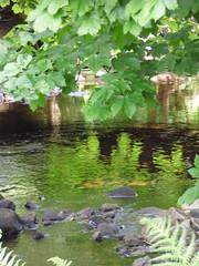 Monamore Burn reflections (afwrite) Tags: river stream water burn leaf green summer may scotland island arran firthofclyde ayrshire hf walk lamlash ross
