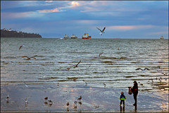 Feeding the Gulls with Grandpa (HereInVancouver) Tags: outdoors grandpa grandson gulls birds feedingthebirds ocean pacific twilight spring englishbay vancouverswestend thingstodobythewater canong3x vancouver bc canada westcoast candid beach freighters boats cloudy