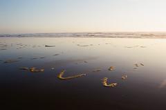 (Alyson Bowen) Tags: oregoncoast sunset beach pacificocean pacificnorthwest reflection 35mmfilm colorfilm kodak nikon nikonn75 nikonfilmcamera oregon istillshootfilm filmisnotdead