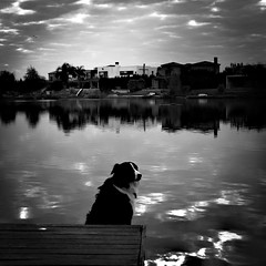 Black and white border collie. Lovely. (Maria Chanourdie) Tags: iphoneography iphone photo photographer cielo sky laguna lagoon nubes clouds refflejo monocromática monochrome byn blancoynegro blackabdwhite dog