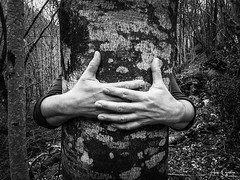 Hug the tree (Aran Kos) Tags: nature wild mother earth black white bianco e nero monocromatico italy photo texture