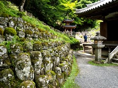 P5271381-Edit.jpg (marius.vochin) Tags: religion kyoto plant buddhism otaginenbutsuji asia travel garden flower googlevision trip outside statue temple japan labels kyōtoshi kyōtofu jp