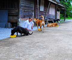 ,, Mamas Talking ,, (Jon in Thailand) Tags: dogs dog k9s k9 mama rocky littlestubby legsthezoomer thenursenun jungle themonkeytemple junglestreetphotography streetphotography nikon nikkor d300 175528 yellow green concreteroad dogbowl dogseating dogkibble dogtails dogears talkingdog rescueddogs littledoglaughedstories