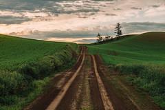 Hittin' The Roads (Pedalhead'71) Tags: dirtroad drive easternwashington landscape palouse road rural washington whitmancounty garfield unitedstates us