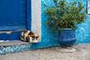 _DSC4565 (BasiaBM) Tags: kasbah udayas rabat morocco