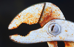 old grumpy O'Tool (HansHolt) Tags: waterpumppliers pliers pipepliers waterpomptang tool gereedschap old grumpy rusty metal metaal macro canon 6d 100mm canoneos6d canonef100mmf28macrousm macromondays handtool hmm weeklythemes inspiredbyasong ironman
