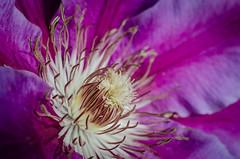 Doctor Ruppel (Stephen Reed) Tags: flowers spring naturalbeauty flora nikon d7000 garden closeup