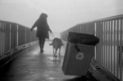 Windy Conditions (Sonnar, 1936) (PositiveAboutNegatives) Tags: leica m3 rangefinder vintage leicam3 carlzeissjenna zeiss czj 50mm sonnar 50mmsonnarf15 prewar film analog foma fomapan fomapan100 foma100 arista bw blackandwhitefilm kodak hc110 coolscan dog lab labrador