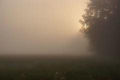 *** (pszcz9) Tags: polska poland przyroda nature natura pejzaż landscape łąka meadow las forest wschódsłońca sunrise mgła fog mist słońce sun beautifulearth sony a77 jesień autumn