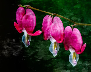 3 Hearts of Spring