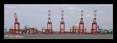 The Giant Cranes at Gladstone Docks (ScreamingSkulls) Tags: cranes mersey red skyline river water terminal portofliverpool peelports rivermersey liverpool2 gladstonedocks sthelenscameraclub ericmercer screamingskulls merseyside liverpool docks recordphotography illustrative landscape industrial