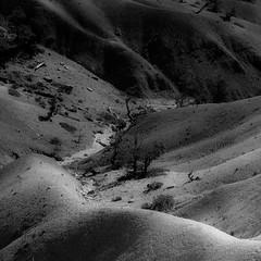 In Canyons 236 (noahbw) Tags: brycecanyon d5000 nikon utah abstract autumn blackwhite blackandwhite bw canyon desert erosion hills landscape monochrome natural noahbw rock square stone