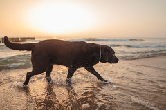 Baltic, 06.2018 (mikee.wilczek) Tags: blue baltic sea crow crows common rosefinch green sunset sun beach doggo lab labrador canon sigma 20mm 14 art 70200mm f4l fetch fog water colors colorful deer long exposure grass