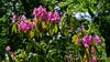 Moorlands Nature Reserve (alh1) Tags: yorkshirewildlifetrust england northyorkshire wigginton