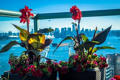 Flowers, tanker ships, sea planes, inlets and Vancouver from the balcony.