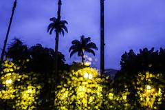 _MG_5632 (loubacksurf) Tags: luzes amarelo azul coqueiros praça céu luminárias prédio