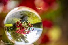 Nature (KarinaSchuh) Tags: felder jahreszeiten landschaften natur wiesen lens lensball ball