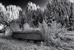 A little overgrown (David Feuerhelm) Tags: monochrome bw blackandwhite noiretblanc schwarzundweiss contrast infared ir wideangle grave gravestones churchyard linton nikon d90 1020mmf456