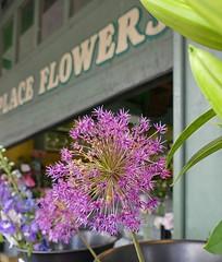 Ode to orange 2010 (steckphotos) Tags: purple flower pike place flowers market seattle