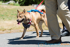 2018Furry5K_600_5172 (Raymond Kwan Photography) Tags: furry5k animal shelter dog puppy charity sewardpark 2018 5k run furry