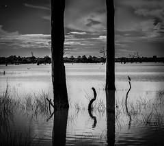 breakaway (Just Ron ;)) Tags: blackwhite udawalawe srilanka nikon imageron reflections bird nature lake clouds travel