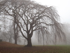Mysterious Atmosphere (Stanley Zimny (Thank You for 30 Million views)) Tags: mist fog tree skylands botanical garden nj mysterious landscape mood atmosphere silhouette