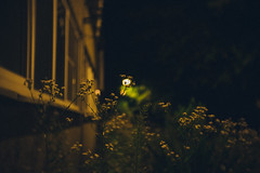 TRUST ME I'M THE MOON (Lucas/mmetry) Tags: lucasymmetry poznań nightphotography night nightshots nightshoot mood moon avaliablelight fujixt10 fujifilm fujixseries photographersonflickr artistsonflickr agfa vintage vintagelens fauxvintage