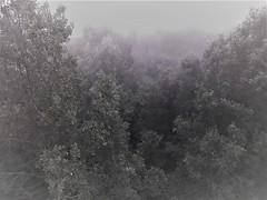 Fog in the valley (Gilbert-Noël Sfeir Mont-Liban) Tags: nebel nebbia nebbione brouillard fog frühling spring printemps kesserwan montliban mountlebanon liban lebanon