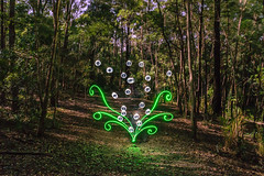 Bubble Plant (stephenk1977) Tags: australia queensland qld brisbane nikon d3300 alderley banksstreetreserve light painting brushes pen plexiglass circle bubble plant moon full moonlight