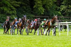 trotting race (Guy Goetzinger) Tags: goetzinger d850 nikon 2018 race horse trotting aarau pferderennen sport action cheval course pferde rennen sulky battle championship