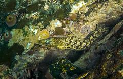 Galapagos snake eel-0316 (kasiahalka (Kasia Halka)) Tags: animals beach espanolaisland galapagos galapagosislands gardnerbay mantaray nature ocean outdoor pacificocean sand schooloffish sealion sealions starfish travel water snorkeling eel