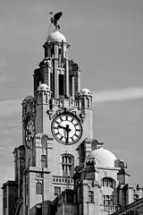 Liver Bird / L3 (Images George Rex) Tags: 4c54d905327d458fabdb788c9a78af48 liverpool merseyside uk liverbird heraldry liverbuilding architecture dome baroque bw blackandwhite cormorant england photobygeorgerex unitedkingdom britain imagesgeorgerex