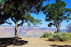 Living on the Edge, Grand Canyon, AZ 9-2015 (inkknife_2000 (9.5 million views)) Tags: grandcanyon arizona nationalparks usa landscapes dgrahamphoto trees rimofthegrandcanyon