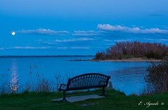 Bench (E. Aguedo) Tags: bench moon moonrise water beach forest sand clouds blue hour evening warwick