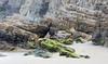 Folding Time (Keith Midson) Tags: cliftonbeach beach rocks cliff shore shoreline coast coastline tasmania