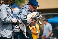 PugCrwal-144 (sweetrevenge12) Tags: portland oregon unitedstates us pug parade crawl brewing sony pugs dog pet