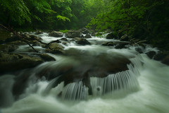 Wailmer (Joaquin James Javier) Tags: greatsmokymountains national park tremont tennessee middle prong little river spring rain rush flow misty rocks moss green forest
